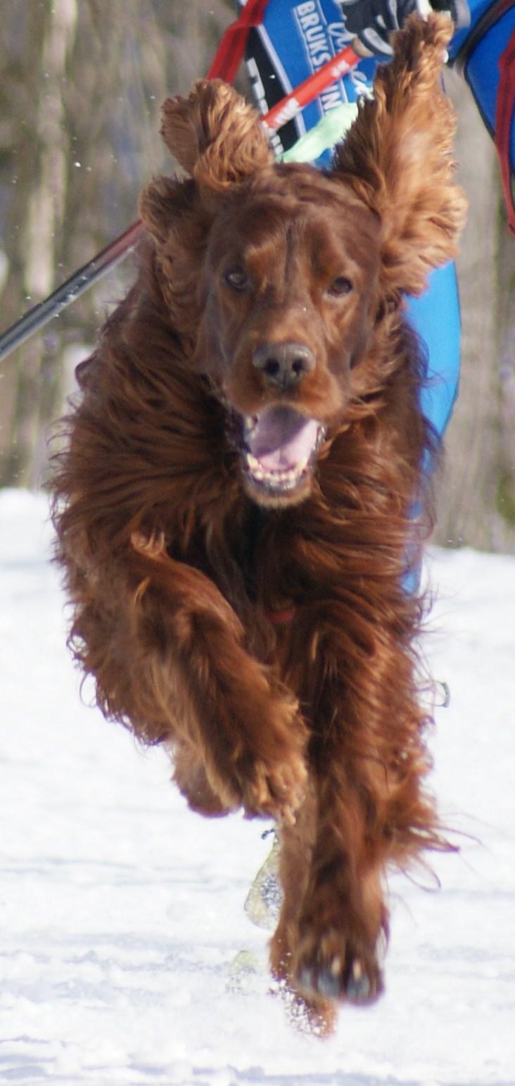 Rasmus mars 2009
