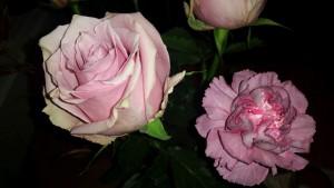 nov-26-fina-rosor